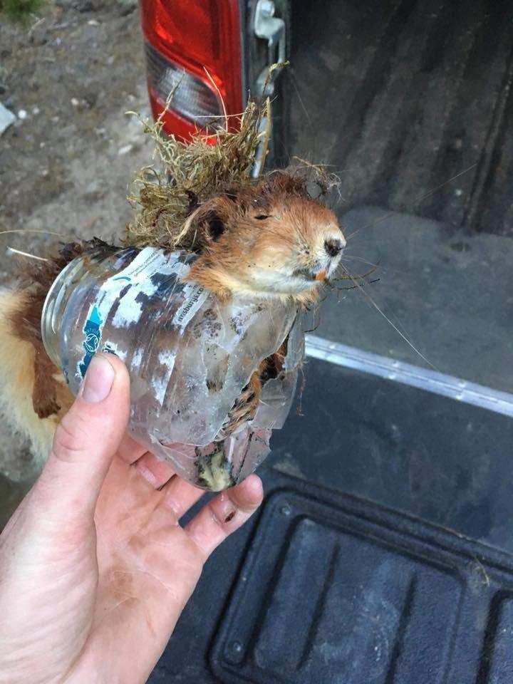 覓食被卡丟棄塑膠瓶割喉亡