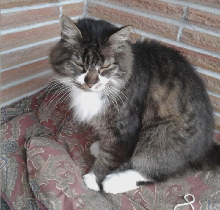 【連環殺貓】美華盛頓州7貓咪遭肢解虐殺