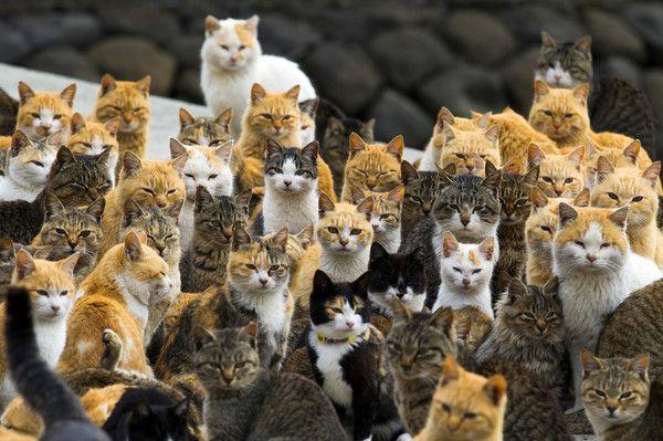 日「貓島」210隻貓下月齊結紮