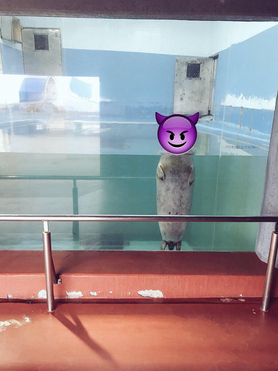 日本水族館海豹哀怨眼神令人心寒
