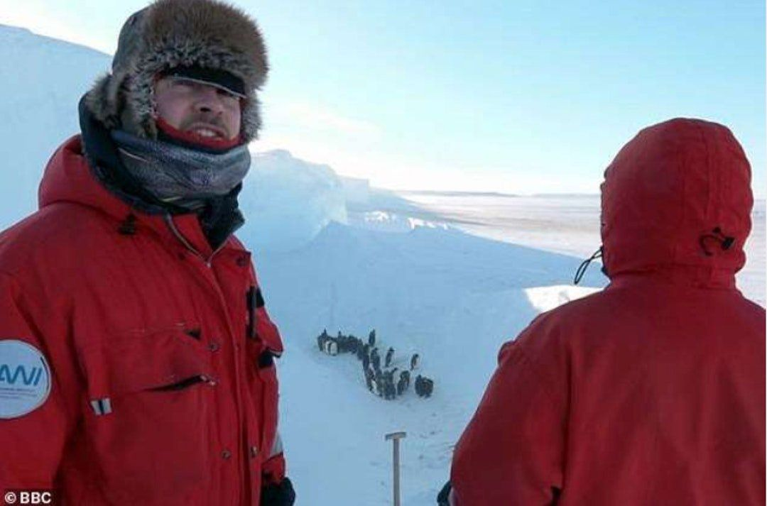 BBC攝製隊拯救遇險企鵝