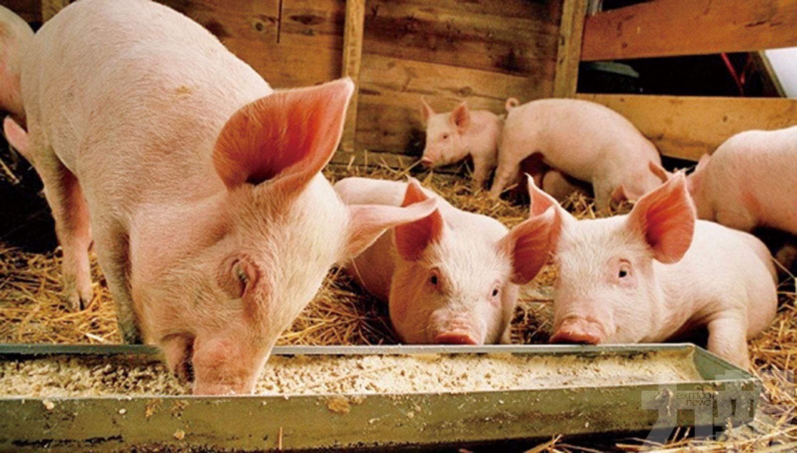 21個省份解除非洲豬瘟封鎖