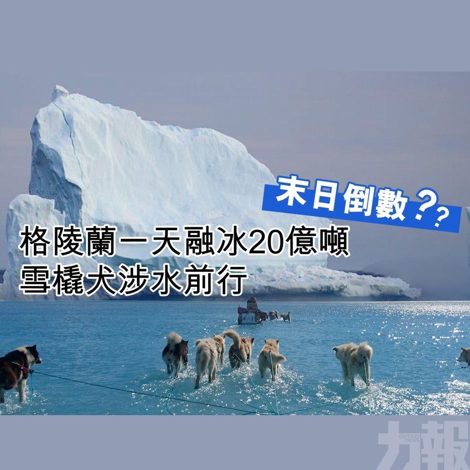 雪橇犬竟然於水面上奔跑