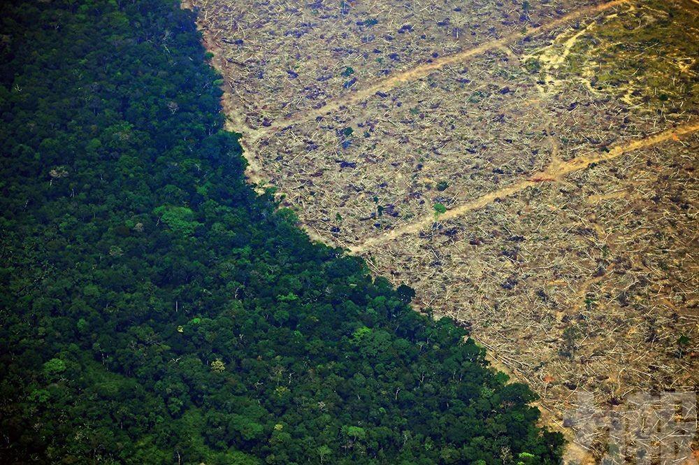 巴西總統派兵救雨林