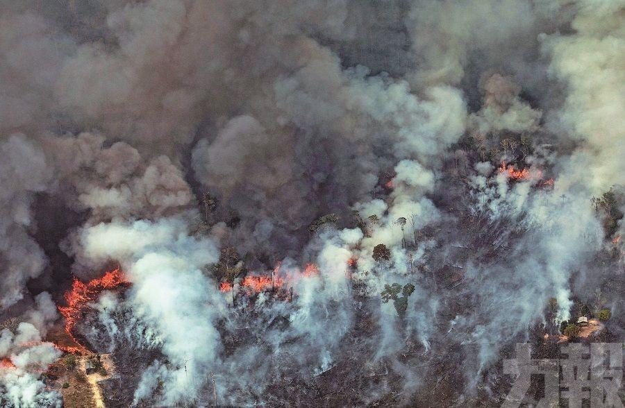 「地球第二個肺」燃燒中