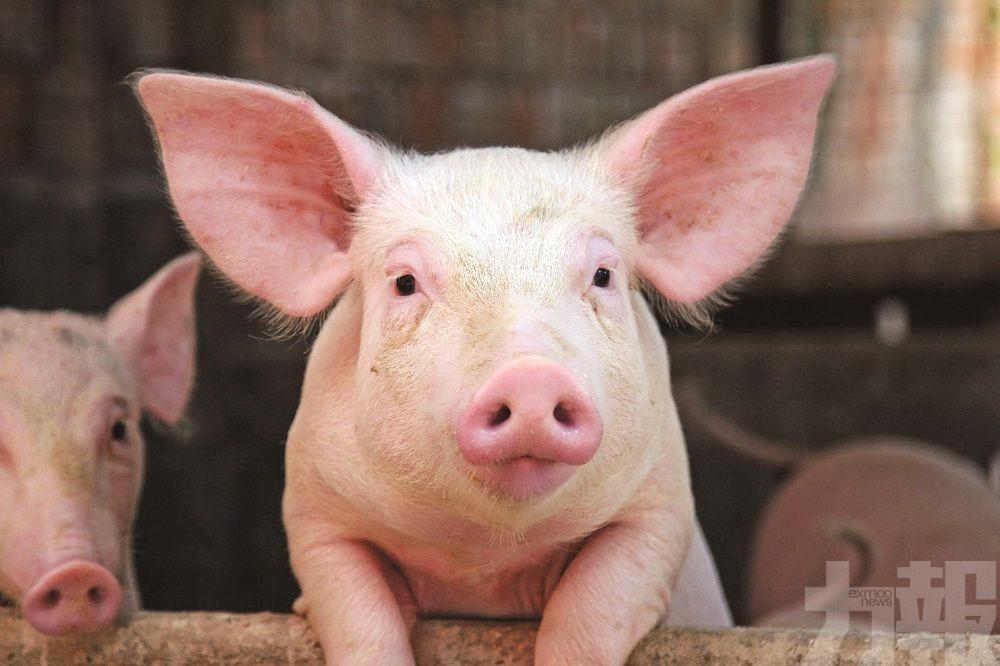 打響豬肉價格保衛戰