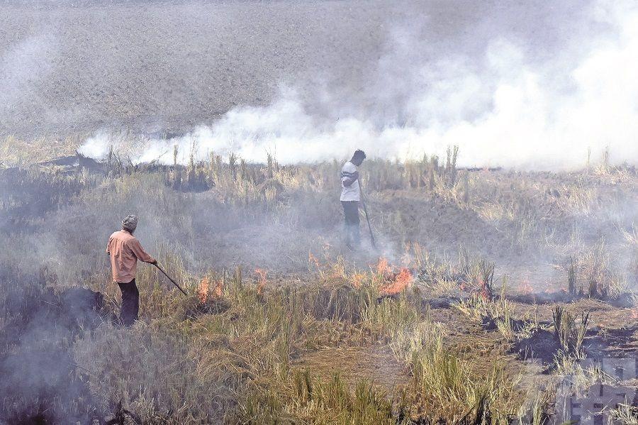 中國和巴基斯坦排毒氣