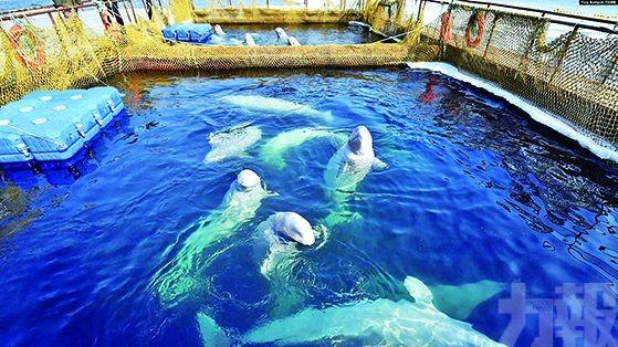 俄「鯨魚監獄」終關門