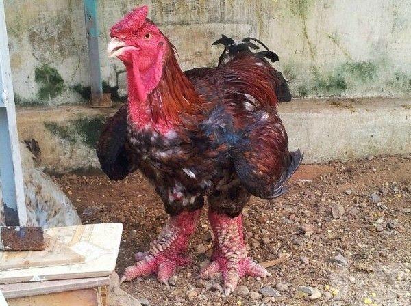 本澳並沒進口相關地區禽肉