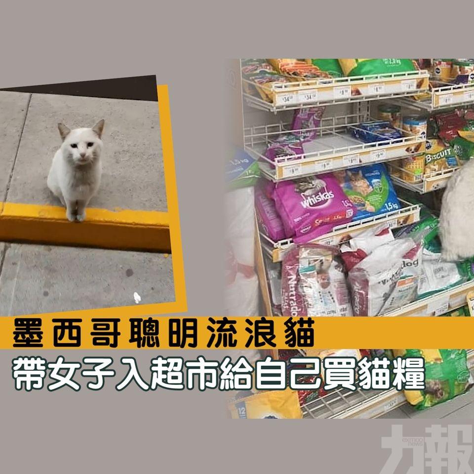 帶女子入超市給自己買貓糧