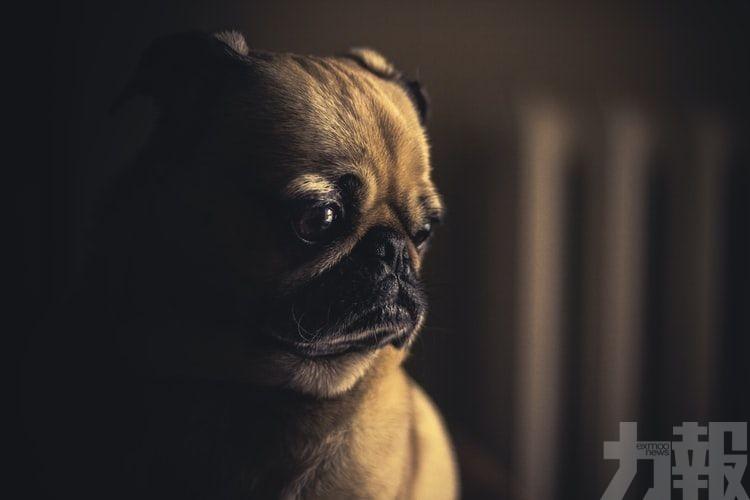 下令狗主交出狗隻送往狗肉店屠宰