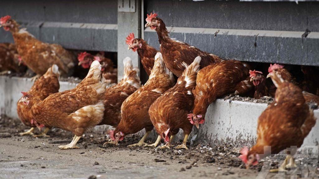 港食安中心停進口禽肉及禽類產品