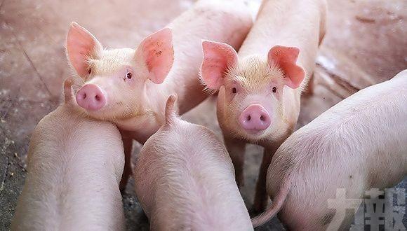 即日起禁進口德國豬肉及其產品