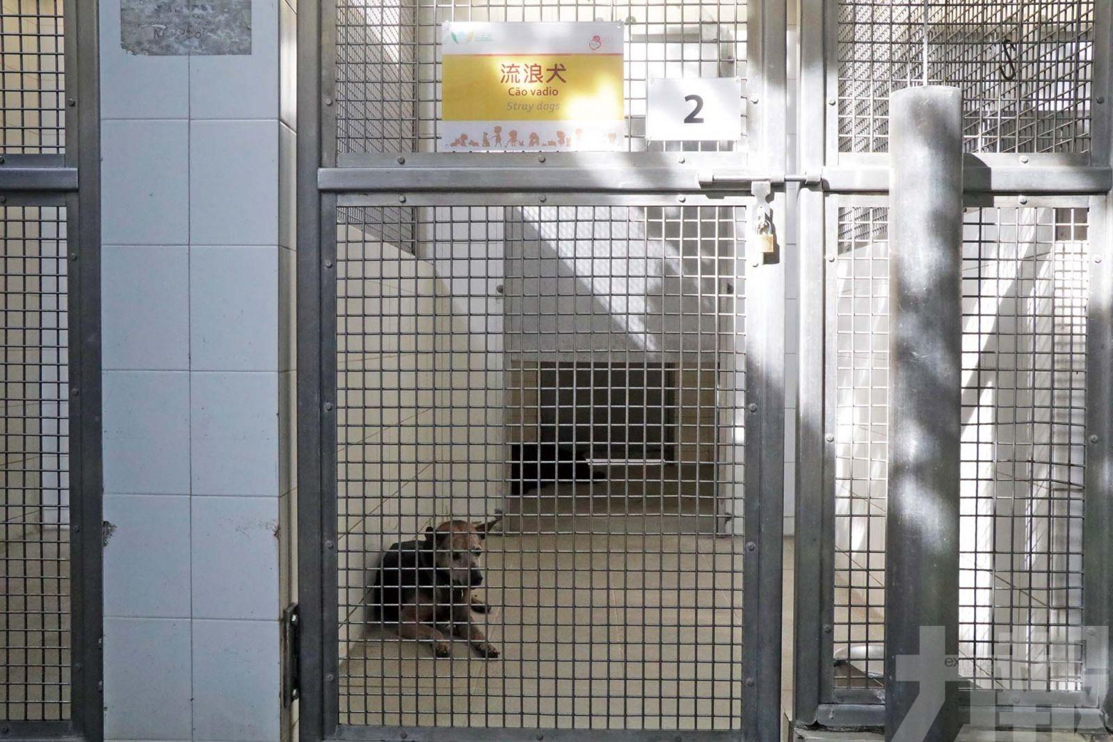 動保團體倡飼主須讀養寵課程