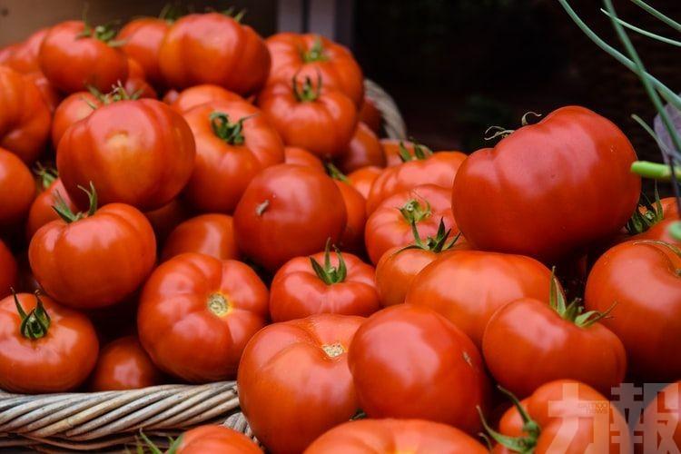 美宣布禁所有新疆棉花蕃茄商品進口