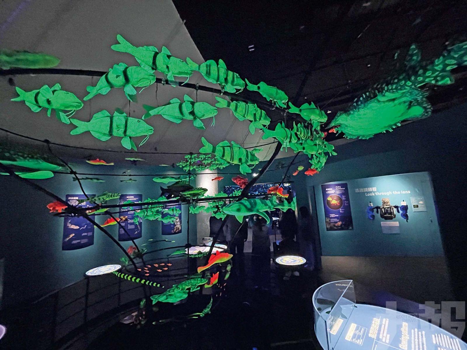 科學館推出「神秘海洋」展