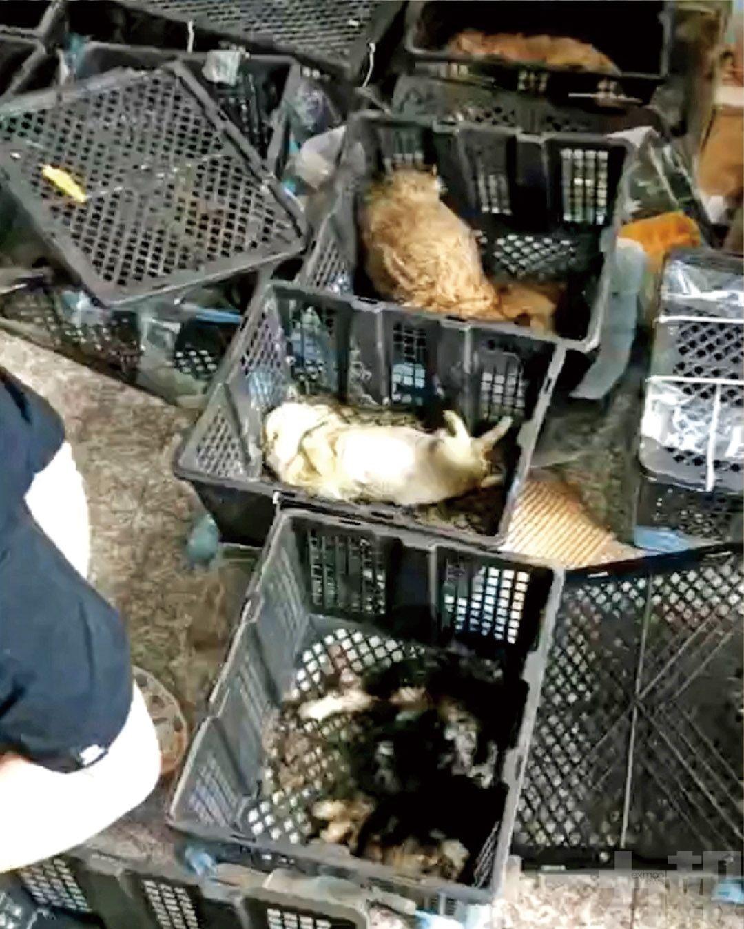 21隻貓狗慘死