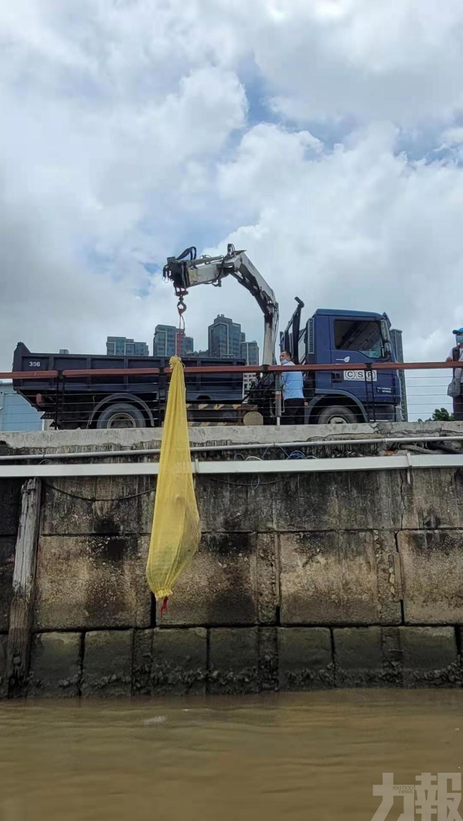 海事局加強清理兩海灘死魚