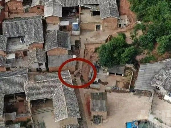 雲南亞洲野象群為何一路北上?