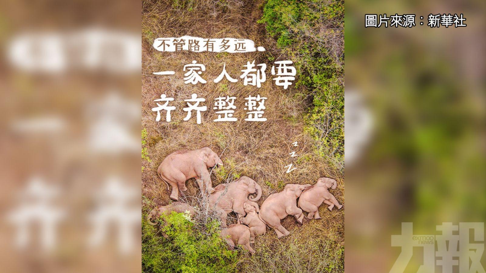 小象睡醒後甩鼻掙扎 逃不出「愛的重圍」
