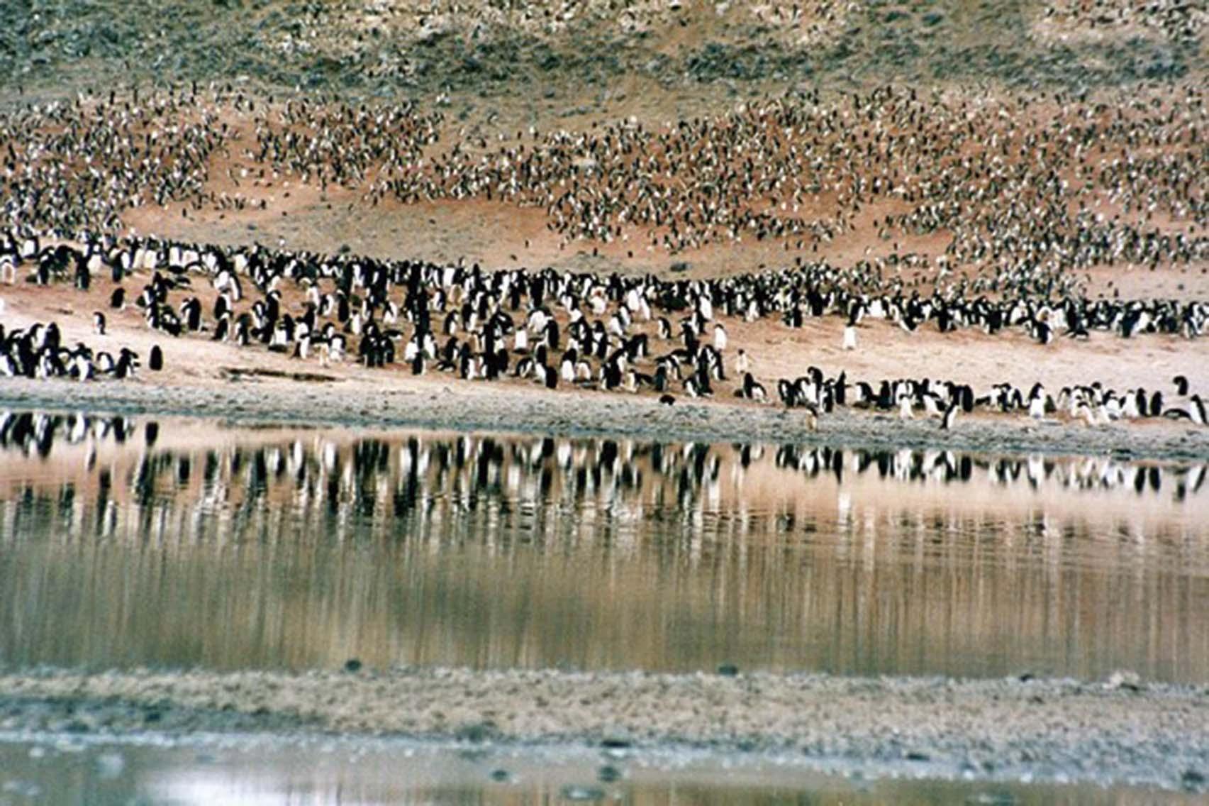 15萬企鵝餓死