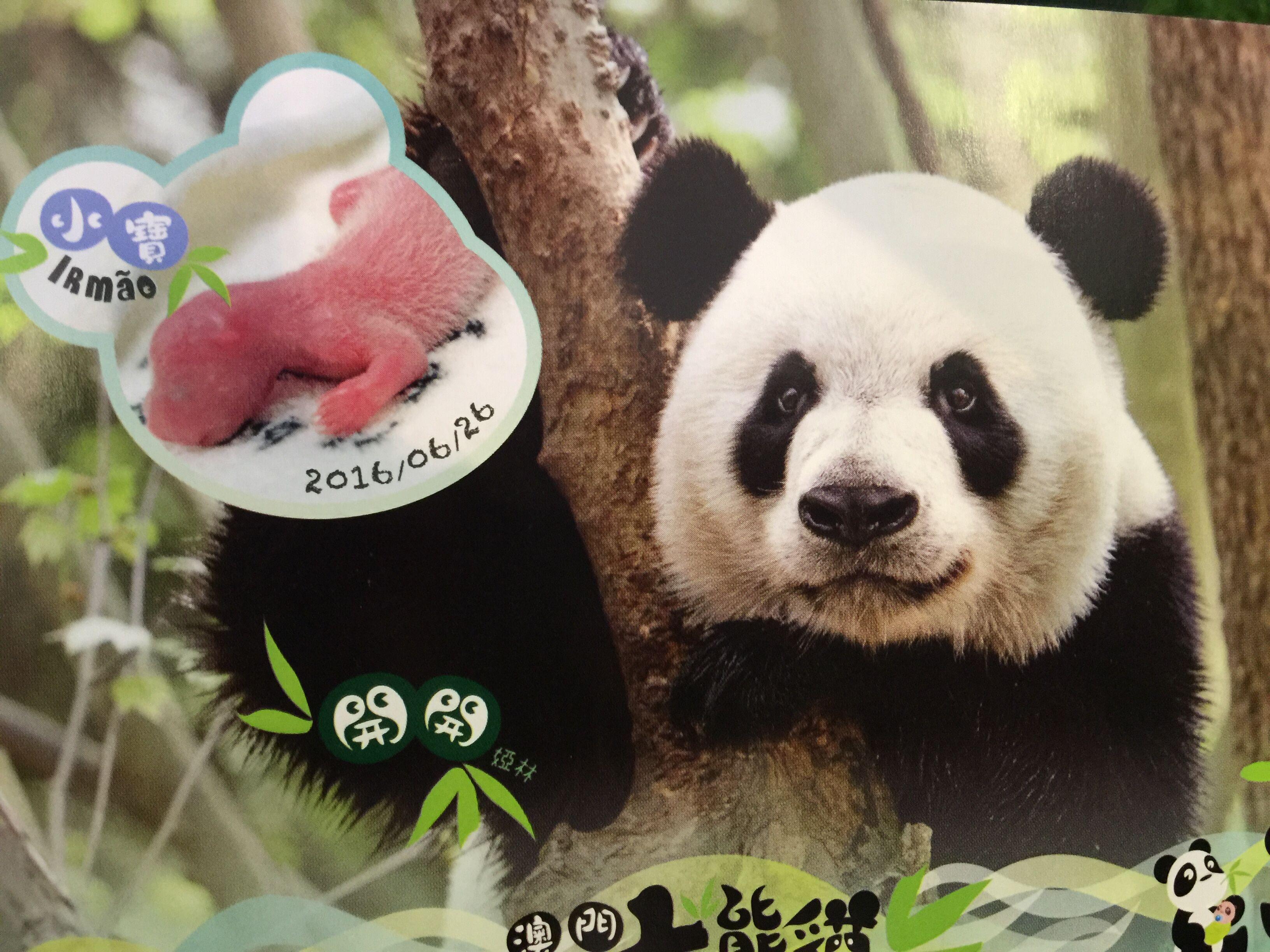 民署派發大熊貓明信片