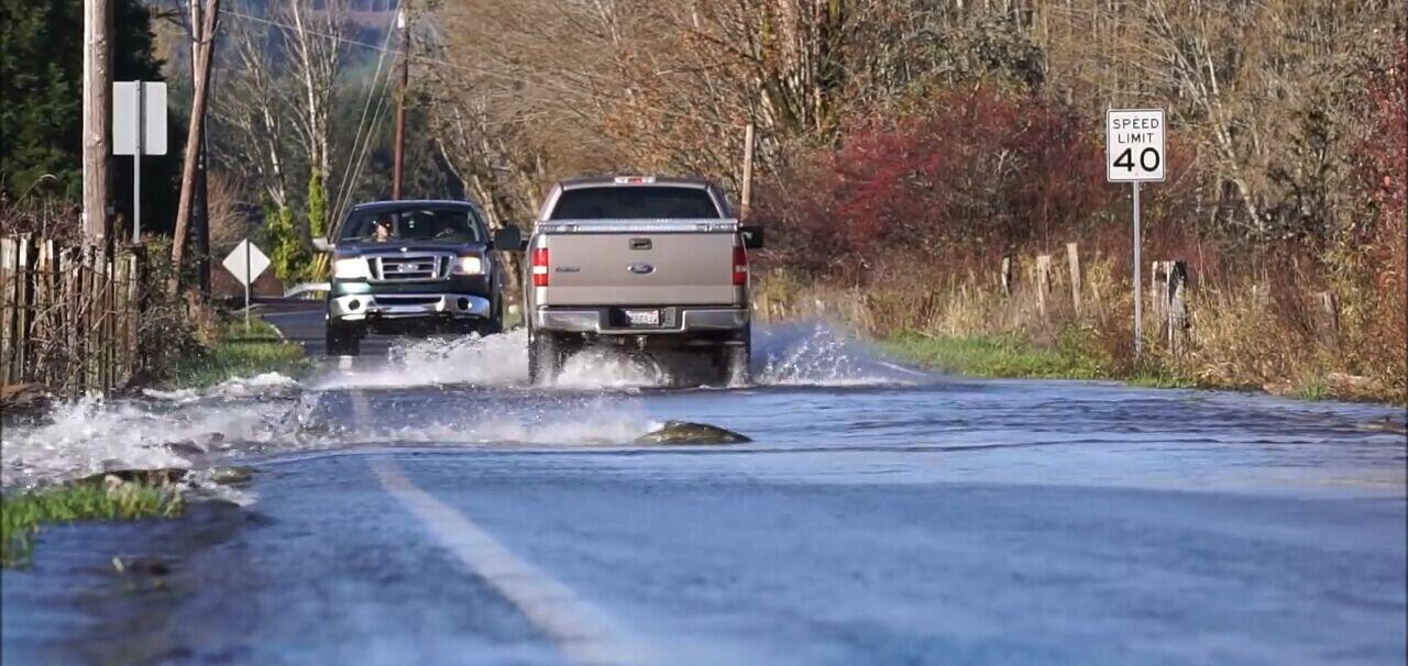 鮭魚結伴「過馬路」
