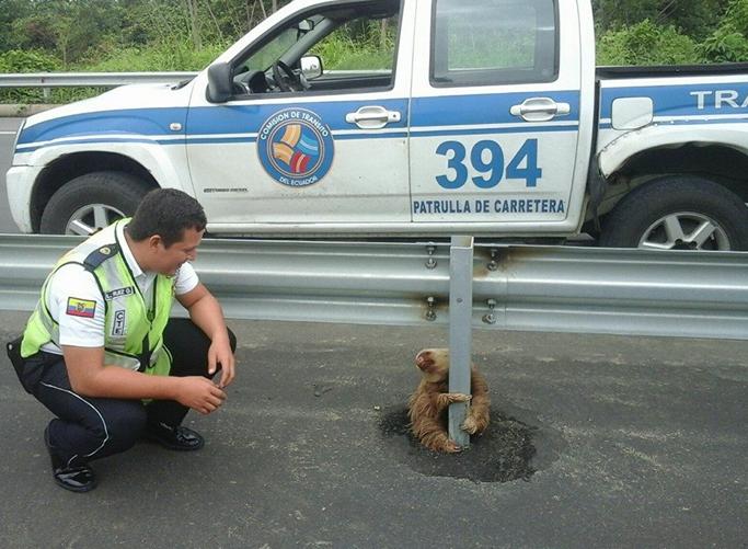 樹懶死攬防撞欄唔敢郁