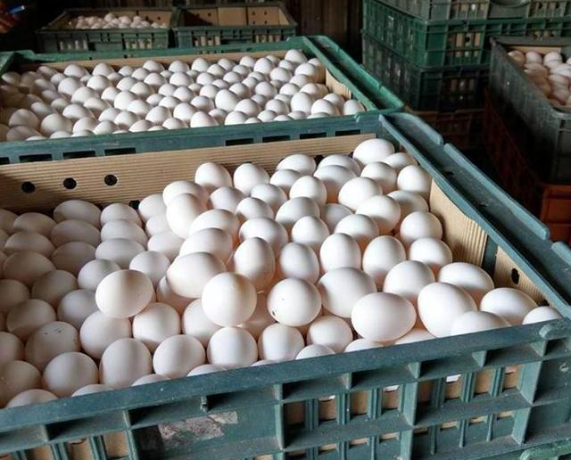 當局消毀兩萬多隻雞蛋