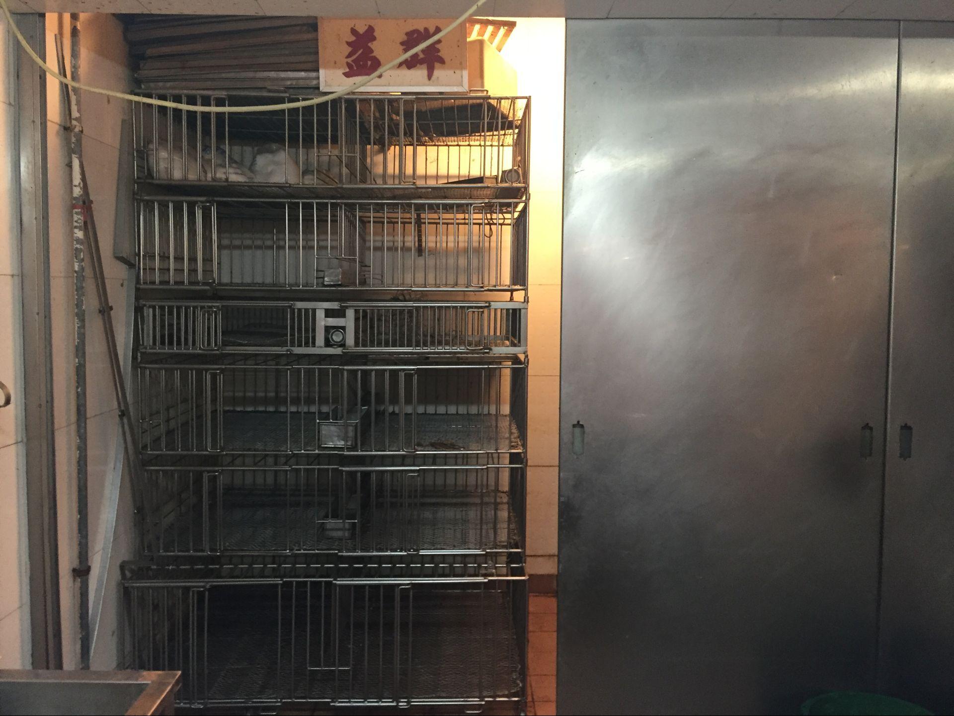 雞販望盡快恢復供應