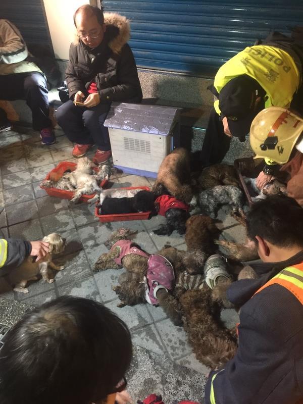 台救護員為狗狗人工呼吸