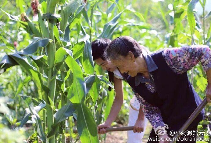 宜昌版林志穎半年賣30萬斤生果