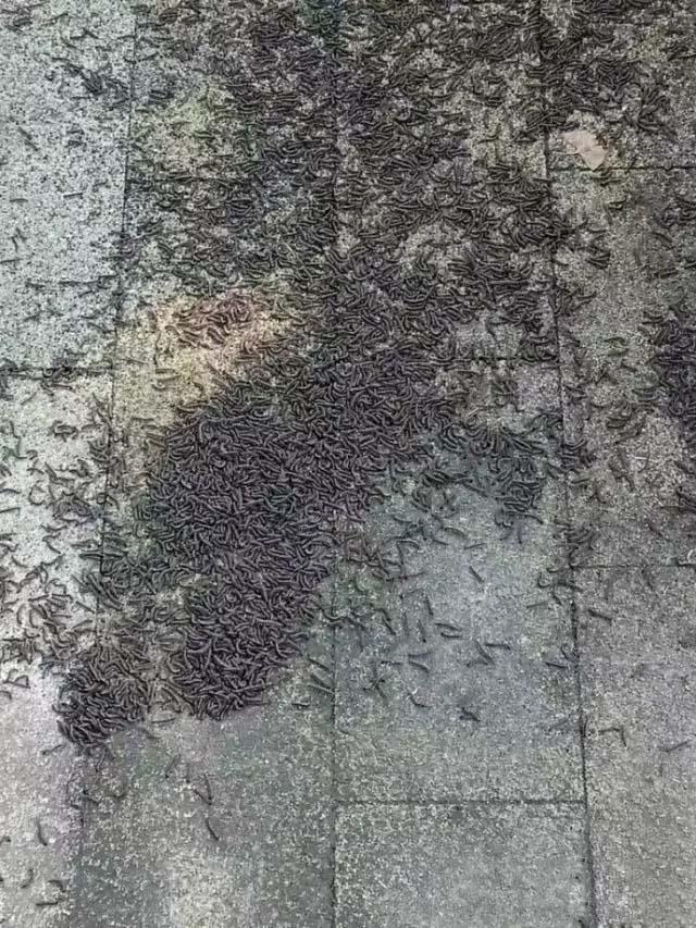 大量怪蟲湧現杭州地鐵
