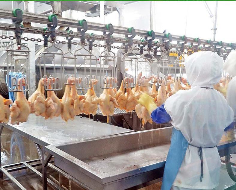 戴祖義 : 約六成雞販接受援助方案