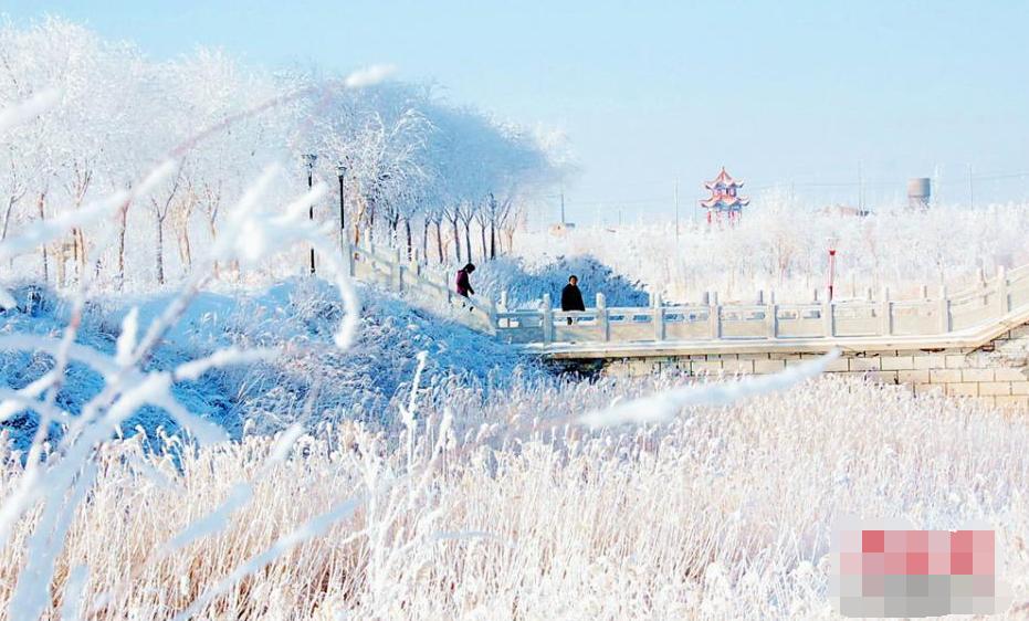 甘肅普降大雪 霧凇美景如童話