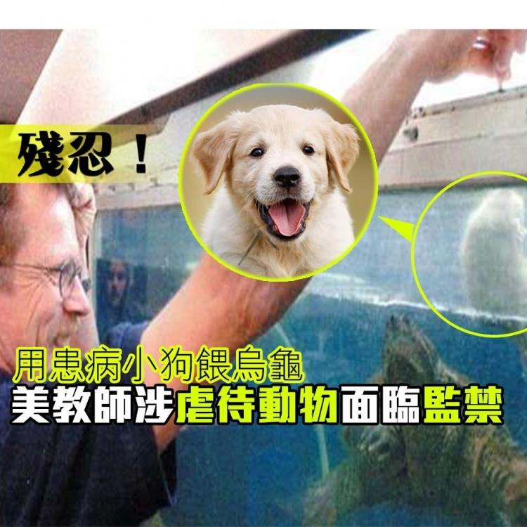 美教師涉虐待動物面臨監禁