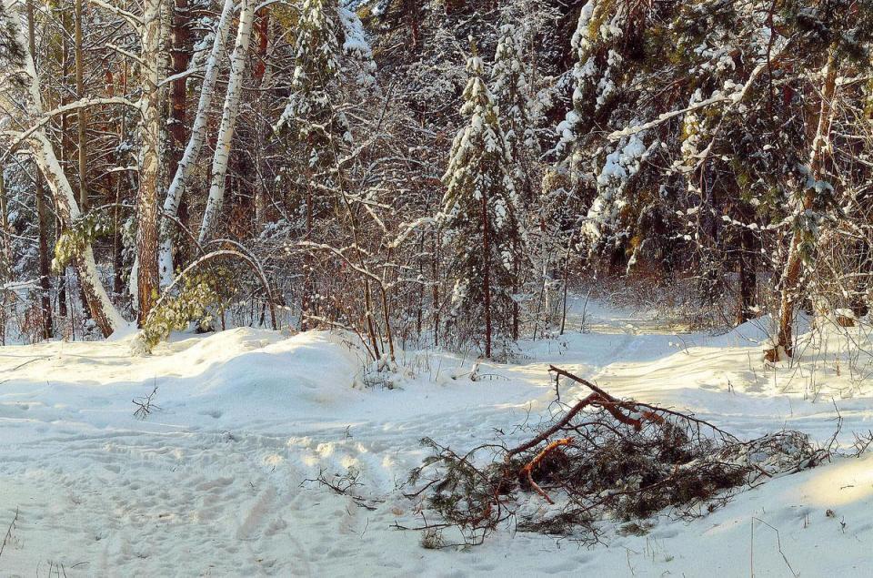 保鮮紙包裸屍棄樹林