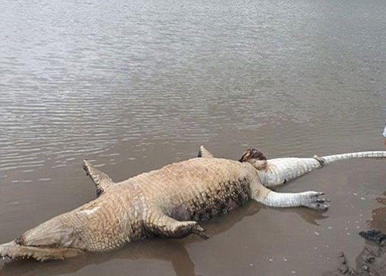 環保人士轟當局「救得太慢」