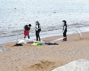 竹灣昨現中華白海豚屍體