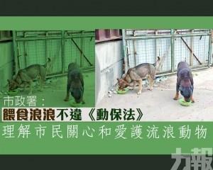 理解市民關心和愛護流浪動物