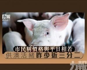 供澳活豬昨少近三分二