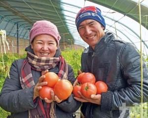 新疆蕃茄1月已遭美禁止進口