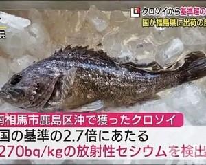 福島黑鮋魚被禁止上市