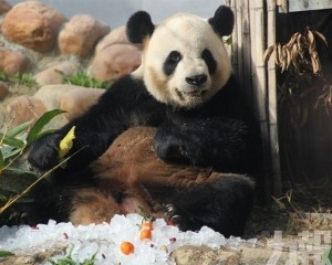 大熊貓館 5 月起免費對外開放