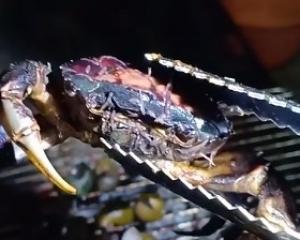 有片!驚嚇!炭火燒蟹燒出大量寄生蟲