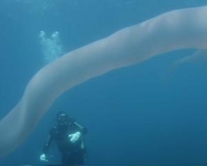 有片!新西蘭疑現8米長深海巨怪