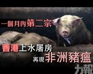 香港上水屠房再現非洲豬瘟