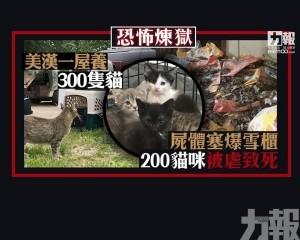 200貓咪被虐致死 屍體塞爆雪櫃