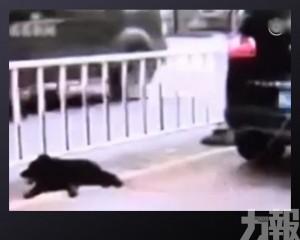 粵狗主將寵物犬綁車尾拖行