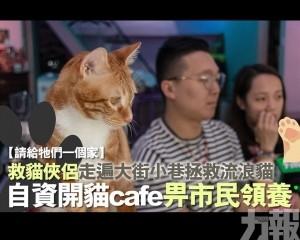自資開貓cafe畀市民領養